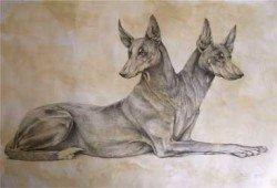 Orthros The Misunderstood Creature